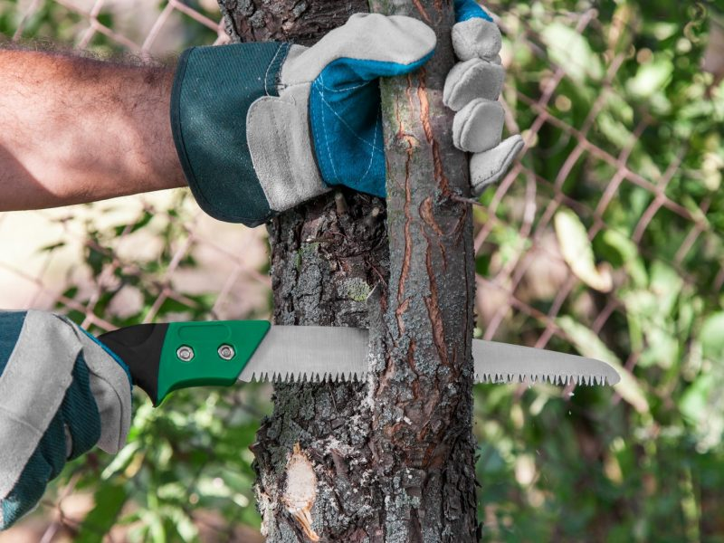 Tree Pruning In Phoenix, AZ