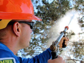 Arborist spraying tree treatment