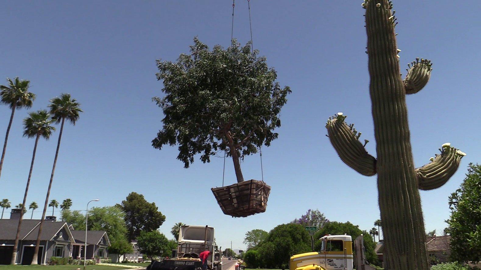 Tree Planting by Design Tree Maintenance