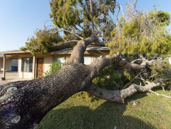 Tree knocked over on top of house after a major monsoon in Phoenix, AZ